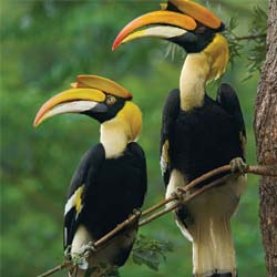 Goa Bird Watching | Best Weekend Deals